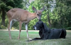 dog and deer as friends